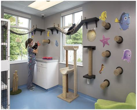 boarding seattle cat kennels boarding seattle best images about kennel on cat boarding