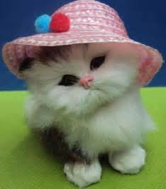 Cute toy and kitty dps awesome dp