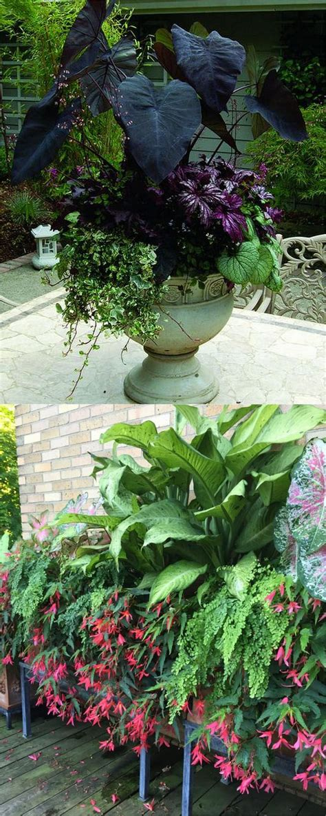 design exle 3 sixteen plants are assigned to 17 best ideas about container plants on container flowers outdoor potted plants and