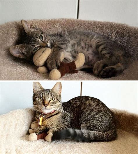 10 before and after photos of pets growing up with their toys bored panda