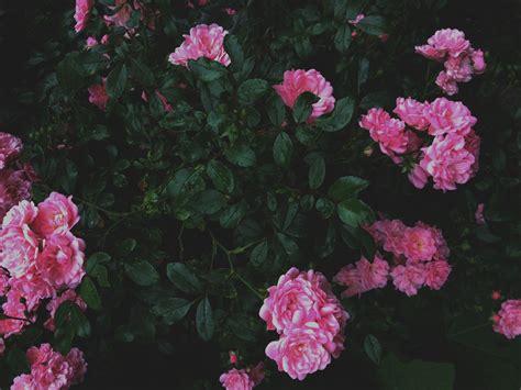 flower wallpaper aesthetic original size of image 3805618 favim com