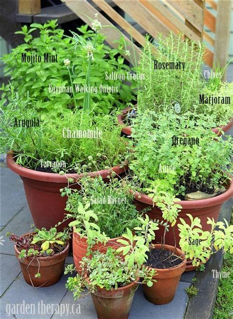 container garden herbs grow your own perennial herb container garden garden therapy