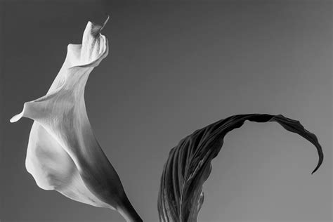 fiori bianco e nero aks biblioteca yves bonnefoy alka seltzer