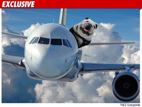 puppy on plane everything you need to about flying with your barkpost