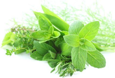 erbe e spezie in cucina erbe e spezie in cucina guida su come utilizzarle