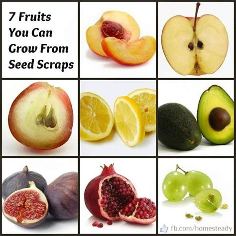 fruit with seeds organic garden diy inspiration