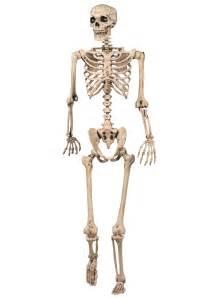skeleton decoration lifesize posable skeleton skeleton decorations