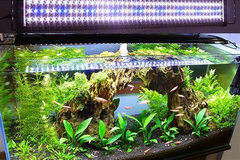 what kind of light for aquarium plants live plants in community aquariums lighting requirements