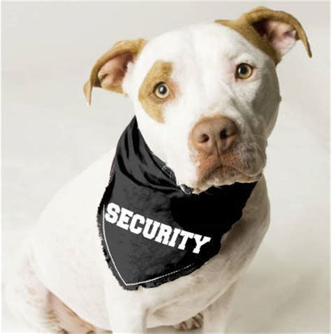 how to security dogs security bandana l doggie