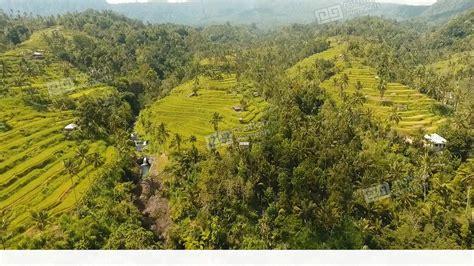 3d Wallpaper 50924881 Terrace Rice Fields Bali terrace rice fields bali indonesia stock footage 11120801