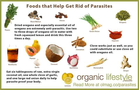 Detox Diet To Kill Parasites by Foods That Kill Parasites Whole Food Remedies