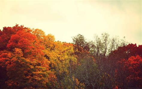 Fall Desktop Wallpaper Tumblr | notforgotten farm happy autumn