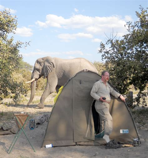 backyard discovery elephant tent 2017 2018 best cars