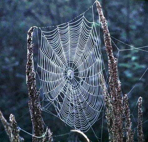 Spider Web 2dweb