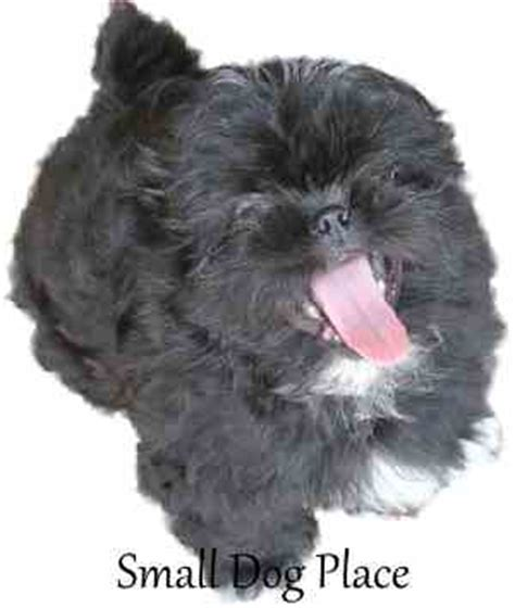 small black puppy 100 best black names