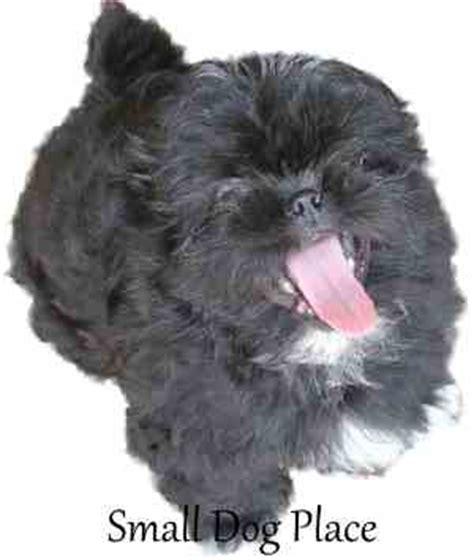 black names puppies 100 best black names
