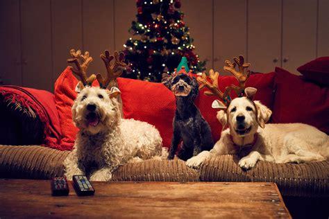 christmas   air merry woofmas  christmas  created   dogs