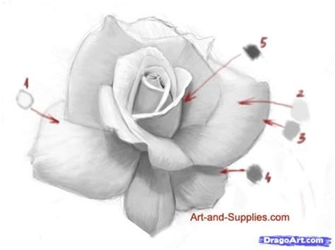 rose tattoo tutorial 240 best images about flowers drawing of rosa on