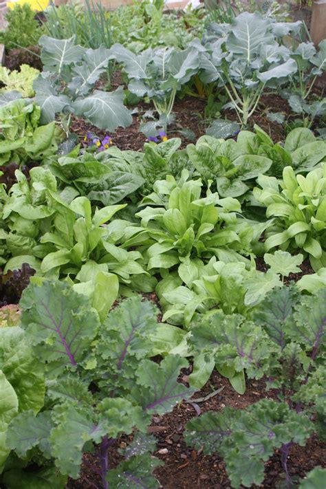 Meet Claire Bickle Organic Vegetable Gardening Mcfarlane