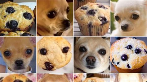 Dog Food Meme - move over dress the dog or food meme will blow your