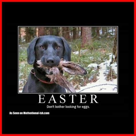 Labrador Meme - labrador retriever labrador puppy labrador retriever
