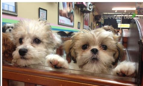 broadway puppies broadway puppies and boutique closed 12 photos 10 reviews pet shops 24 02