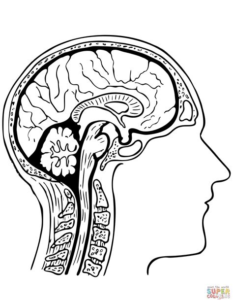 Brain Coloring Page Human Brain Coloring Pages by Brain Coloring Page