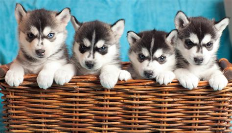 national spoil your day ways to spoil your pet on national puppy day pennysaver coupons classifieds