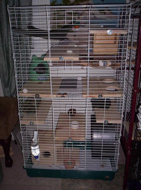 2 my home cages nola chinchilla rescue