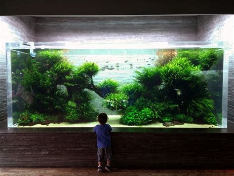 Aquarium Aquascapes by Still Stunning Ada Designed And Maintained