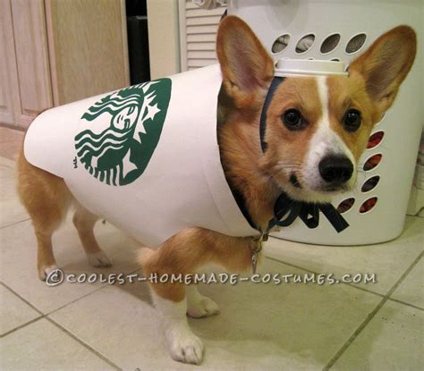 diy puppy costume 100 ideas to try about pet costumes costumes and