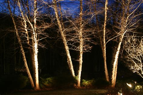 outdoor lighting for trees low voltage lighting frontier landscaping