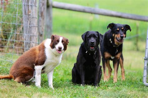 farm dogs the dogs of bedlam farm 1 bedlam farm journal bedlam farm journal