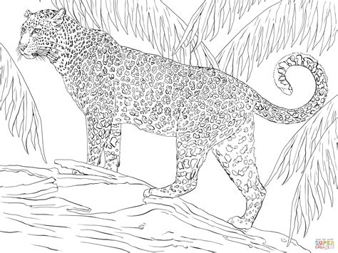 jaguar coloring pages jaguar coloring page free printable coloring pages