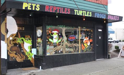 seattle reptiles everett wa united states yelp