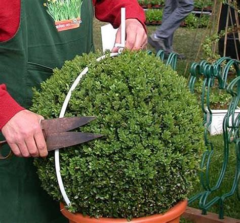 how to topiary diy garden topiary projects the garden glove