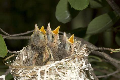 how do birds build their nests news features cj