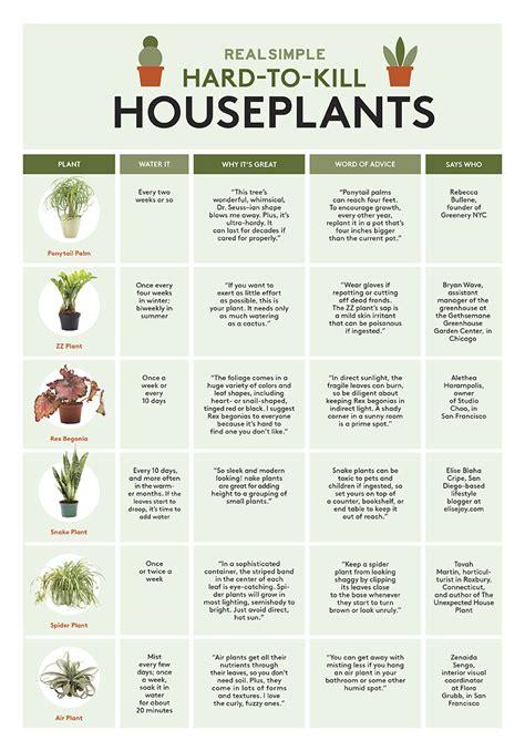 maintenance indoor plants real simple