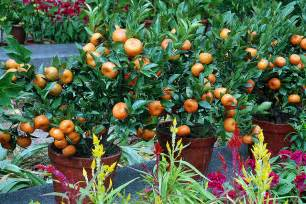 Container Fruit Gardening - the benefits of container gardening