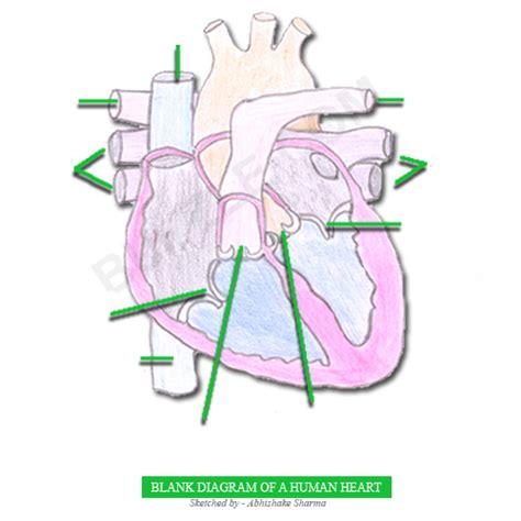 heart diagram  kids