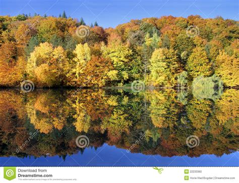 dreamland havanese amazing autumn forest reflected in a calm lake stock photo image 22233360