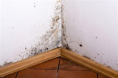 comment enlever de l humidité sur un mur 4231 enlever la moisissure