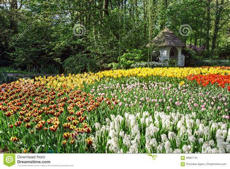 Blumen Garten by Blumen Garten Keukenhof Amsterdam Stockfoto Bild 60867741