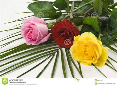 imagenes tres rosas de colores fotos de rosa pictures to pin on pinterest