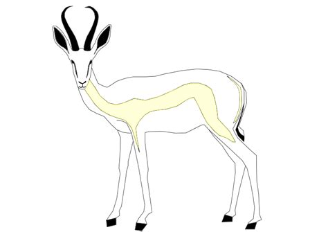 coloring pages springbok how to draw bok