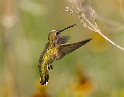 top 28 do hummingbirds eat bugs discovery