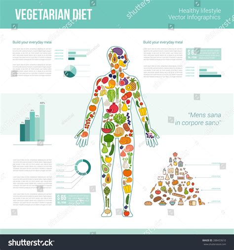 infographics human body vegetarian eating infographics human body composed stock vector 288433610 shutterstock