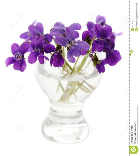 viole in vaso viole in un vaso immagine stock immagine 24576381