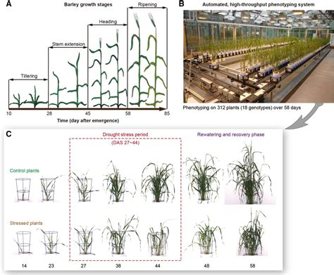 Design Of A High Throughput Dissecting The Phenotypic Components Of Crop Plant Growth