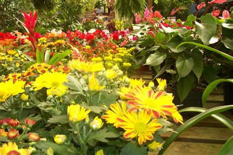potted tropical plants tropical plants house plants potted flowers columbia